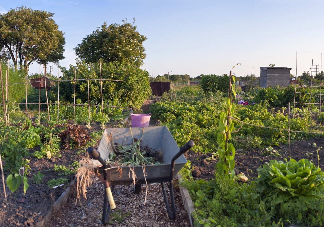 Taking on an Allotment